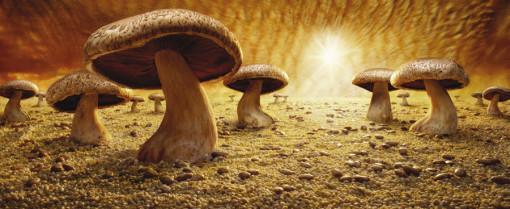 savana de cogumelos